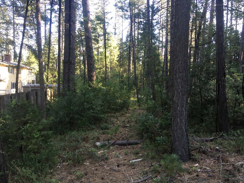 Land Clearing & Wildfire Prevention - 20160418b - before