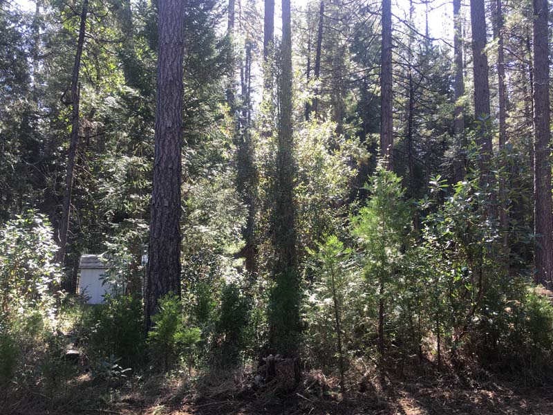 Land Clearing & Wildfire Prevention - 20160418c - before