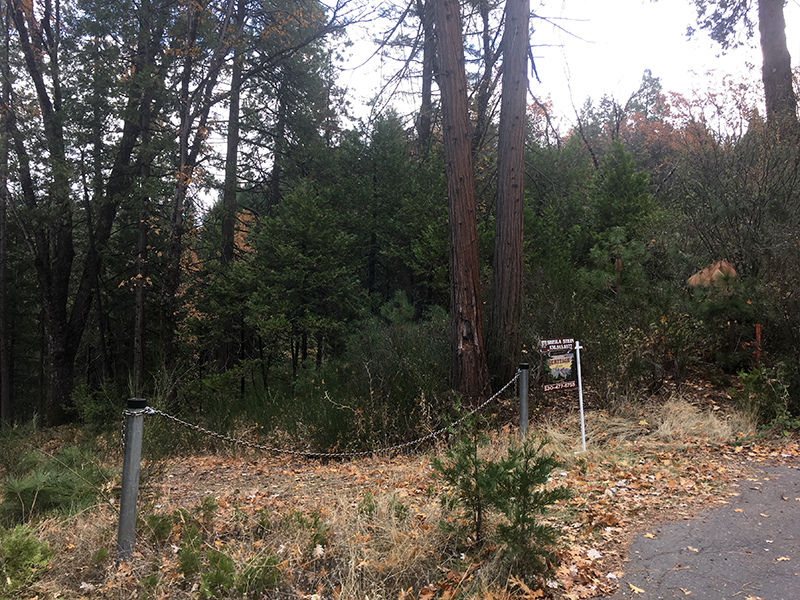 Land Clearing & Wildfire Prevention - Merrill Court 1 - before