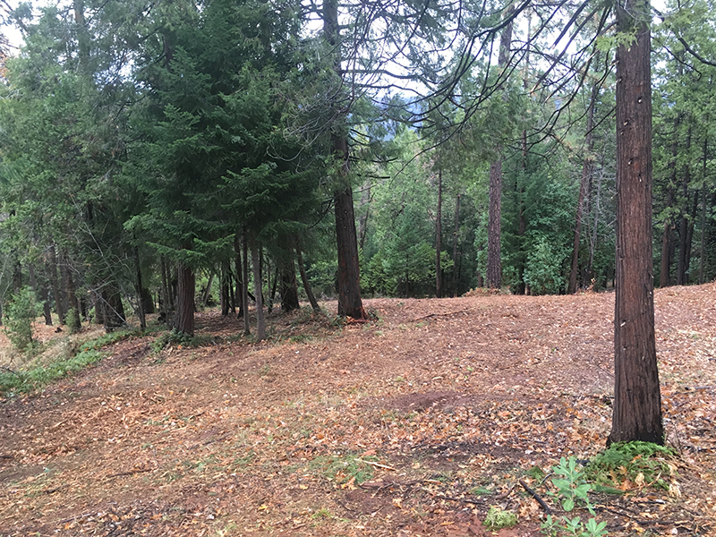 Land Clearing & Wildfire Prevention - Merrill Court 2 - after