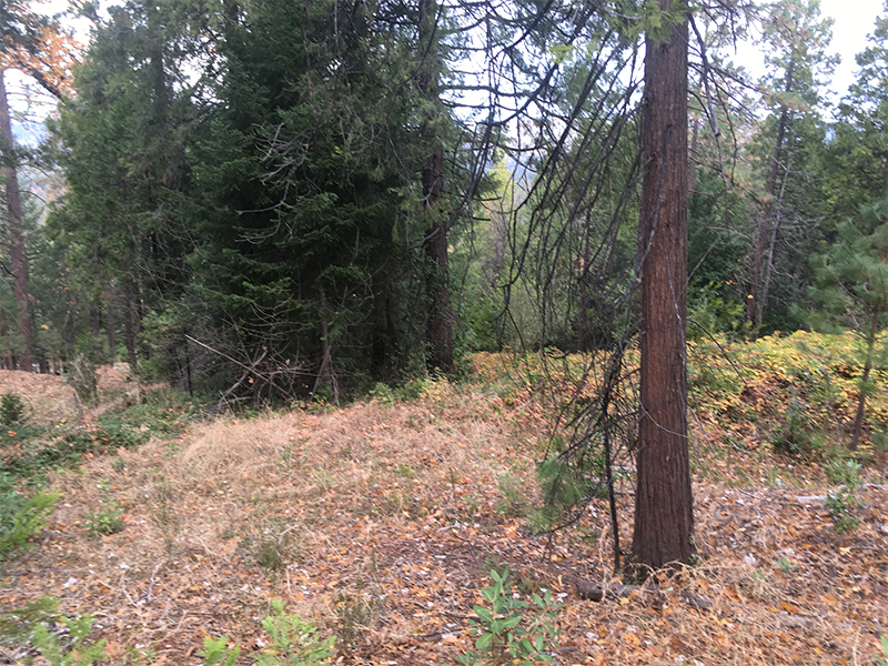 Land Clearing & Wildfire Prevention - Merrill Court 2 - before