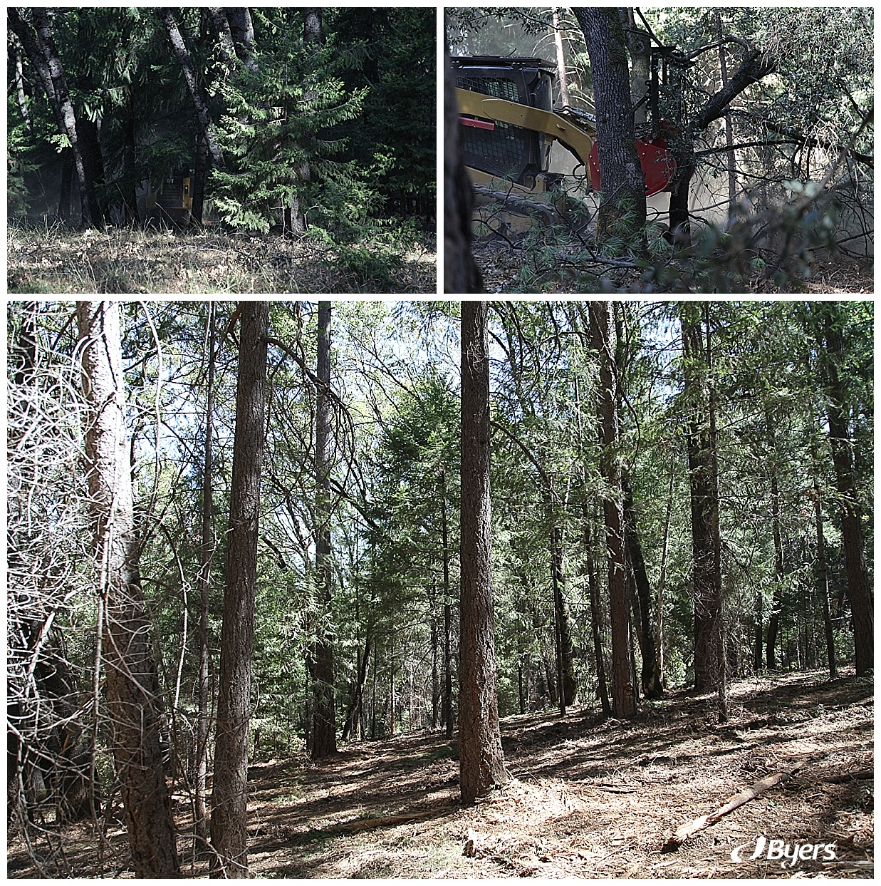 Land Clearing & Wildfire Prevention | Byers | Cameron