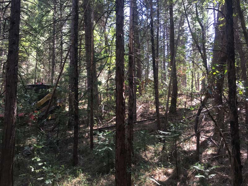 Land Clearing & Wildfire Prevention - 04182016d - before