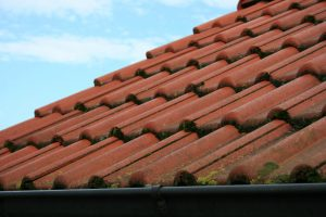 What to Do If I Have Moss on My Roof