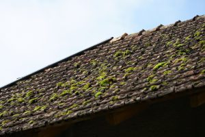 Remove Moss From Roof Shingles